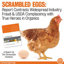 Scrambled Eggs Separating Factory Farm Egg Production From