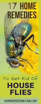 Home Remedy To Get Rid of House Flies 1 e