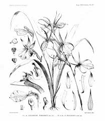 Botany Coloring Book Coloring Pages