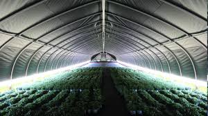 Small Light Dep Greenhouse Increasing Production With Light Deprivation Advancing