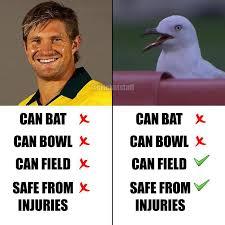 Shane Watson V/s The MCG Seagull : Cricket via Relatably.com