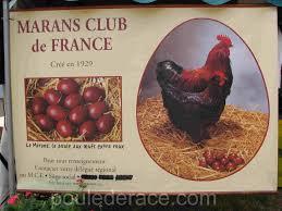 """Résultat de recherche d'images pour """"les poules de marans"""""""