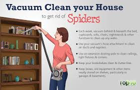 how to kill spiders in house. Vacuum Clean Your House How To Kill Spiders In P