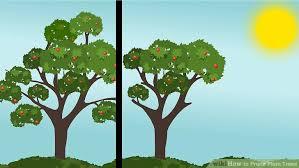 How To Prune Fruit Trees  Organic Gardening BlogPrune Fruit Tree