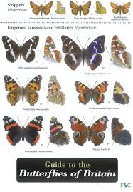 Moth Identification Chart Guide To The Butterflies Of Britain Field Studies Council