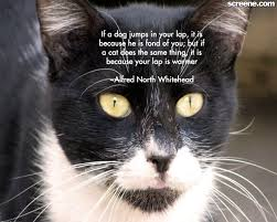 Cat Quotes Cats Wallpapers Innocent Nice Cute Pictures With Litle Pups