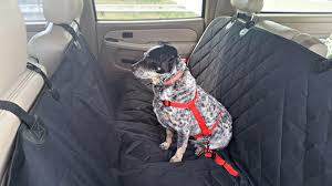 rear dog car seat cover with seat anchors