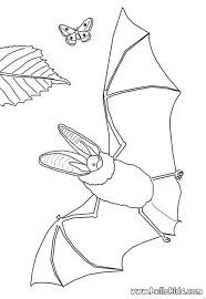 Small Picture Realistic bat butterfly coloring pages Hellokidscom
