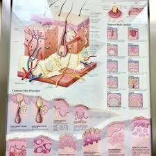 Northwestern Medical Group Dermatology The Best 70