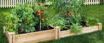 backyard vegetable patch