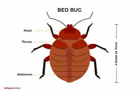 25+ Types Of Insects Found In Beds Background