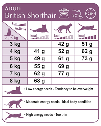 British Shorthair Weight Chart Kg Royal Canin British Shorthair