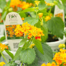 how to care for your texas garden in