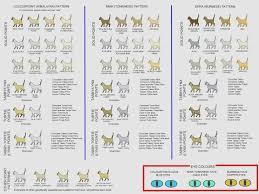 Cat Color Chart Animals Pinterest Char Sphynx Cat Color Chart