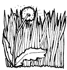 Small Picture Grass clipart coloring page Pencil and in color grass clipart