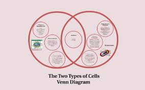 Venn Diagram For Eukaryotic And Prokaryotic Cells By Anthony