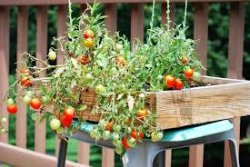 Vegetable Container Garden Ideas Photograph  Gardening GuidContainer Garden Plans Tomatoes