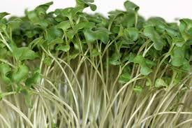 Microgreen Growing Chart Growing Radish Microgreens Home Microgreens