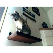 cat stairs for wall cat stairs for wall cat climbing wall stairs on shelves modular