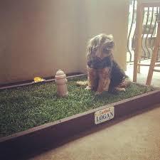 beautiful dog patio potty or dog potty grass delivery 41 dog potty grass patch