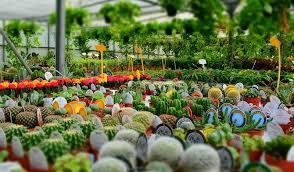 garden nurseries near me. Contemporary Near Plant Nursery Near Me On Garden Nurseries A