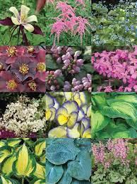 shade garden bluestone perennials