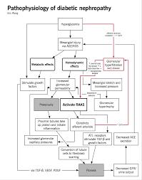 Chronic Kidney Disease Ckd Mcmaster Pathophysiology Review