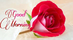 good morning images flowers es and greetings 36