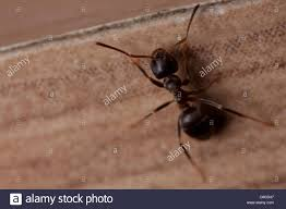 Small Crawling Bugs In Kitchen Tiny Black Mites In Bedroom Stylish Bedroom Decorating Ideas Small