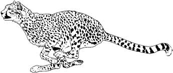 Small Picture Cheetah Coloring Pages For Bebo Pandco
