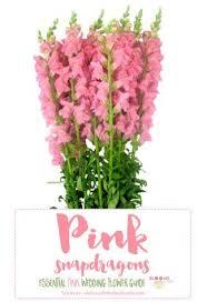 list of pink flowers 100 flowers types list september names of flowers