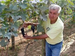 Resultado de imagem para vinho familia ferragut