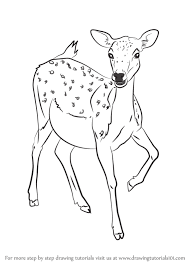 566x800 learn how to draw a baby deer zoo s step by step drawing