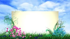 colorful flowers and plants are growing on the screen screen can be used as frame for any desired title