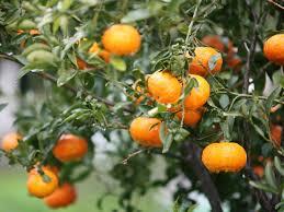 How To Select Fruit Trees  HGTVSmall Orange Fruit On Tree