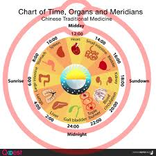 Chart Of Meridians Time And Organs Traditional Chinese