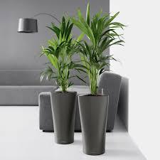 cheap office plants. Round Lechuza Delta Self-Watering Indoor Planter Image Cheap Office Plants
