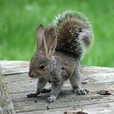 Squabbit <b>squirrel rabbit</b> mix (?!?) | Baby animals pictures, Animals ...