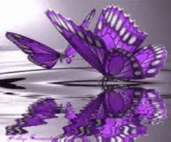 Wallpaper Hd Butterfly Gif