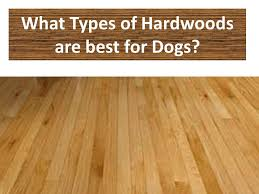 hardwood floors types. Perfect Floors Yes Hardwood And Pets Can Coexist Together This Provides Advice On Types  Species Color Finish That Will Hold Up Best For Dogs And Other Pets With Hardwood Floors Types R