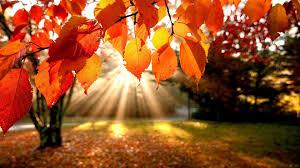 Bildergebnis für autumn pics