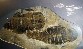 Птеригот - Pterygotus - qwe.wiki