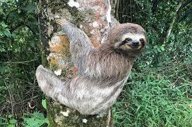 <b>Sloth</b> - Wikipedia