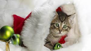 Christmas Kitten HD Wallpaper » FullHDWpp - Full HD Wallpapers ...