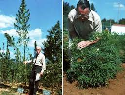 Hemp: A New Crop with New Uses <b>for</b> North America