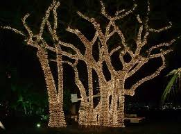 lighting outdoor trees. Christmas Lights In Trees Outdoors Photo - 6 Lighting Outdoor S