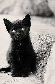 画像めっちゃ可愛い猫のスマホ用壁紙まとめ随時更新 Naver まとめ