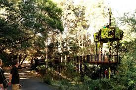 a tree house gazebo set inside the rainforest at the botanic gardens