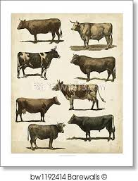 Antique Cow Chart By Vision Studio Art Print Poster