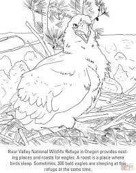 Bald Eagle Chick Coloring Page Free Printable Coloring Pages